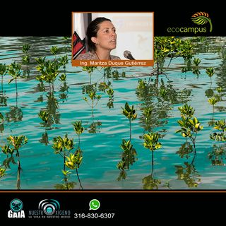 NUESTRO OXÍGENO Si yo cuido el mangle el mangle cuida de mi - Ing. Maritza Duque Gutiérrez