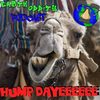 Earth Oddity 87: HUMP DAYEEEEEEE