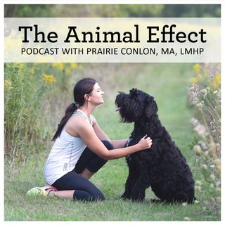 The Animal Effect - Introducing Prairie Conlon
