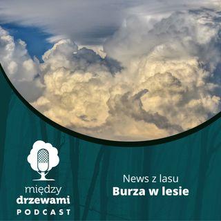 News z lasu - Burza w lesie [opowiada Michał Wieciech]