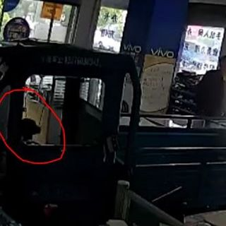 Moron Monday: Owners Dog Drives His Truck Through Cell Phone Store