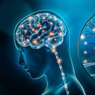 Fitness e neuroscienze