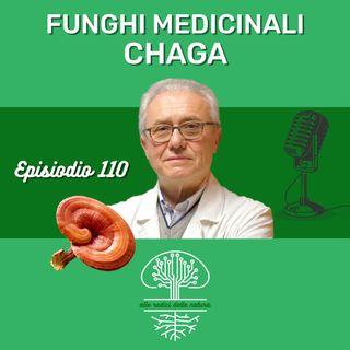 Funghi Medicinali: CHAGA