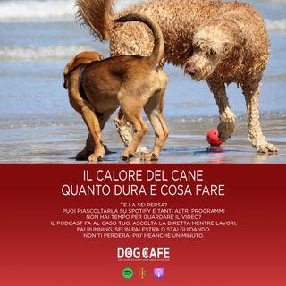 #036 - Il calore del cane quanto dura e cosa fare