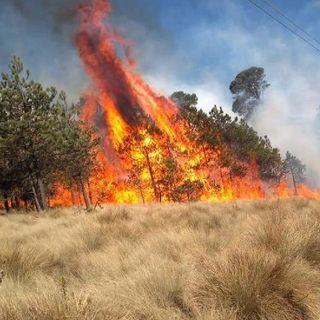 CDMX presenta incremento en incendios forestales