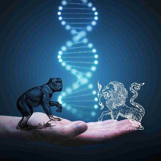 The First Human–Monkey Chimeras Developed in China! This Is Totally Fine, Right?
