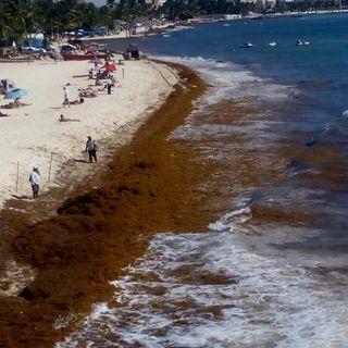 Infestación de Sargazo en las playas de México