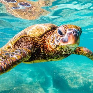 Relaxing Music - Seaturtles