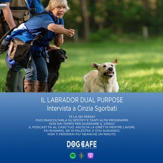 #030 - Il labrador dual purpose. Intervista a Cinzia Sgorbati