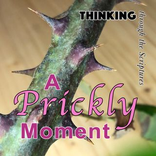 A Prickly Moment (TTTS#14)