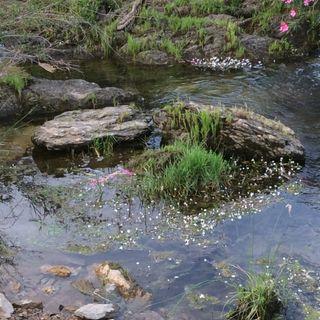 Ecosistema del Arroyo del Convento o de los Frailes