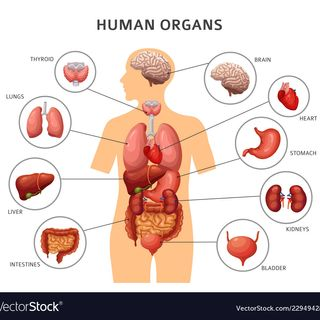 Organs Season(don't vaction overseas)