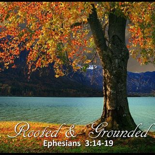 """10-14-18  MESSAGE - """"Rooted And Grounded"""""""