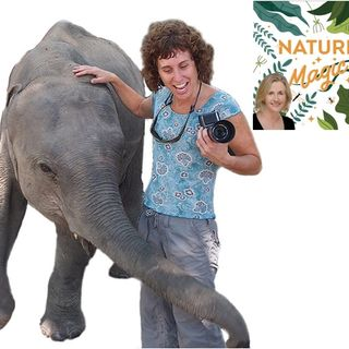 Episode 32 Janie Chodosh meets the Elephant Doctor of India