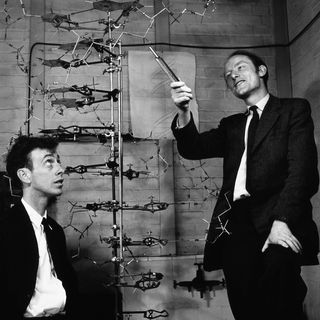 La estructura del ADN: Watson Y Crick.