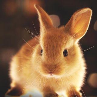 Buongiorno in connessione al coniglio!