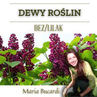Dewy Roślin - Lilak/ Bez | Maria Bucardi