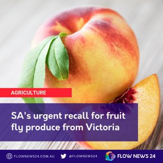 Fruit Fly in South Australian Supermarkets - Wayne Phillips on the FlowFM Morning Show