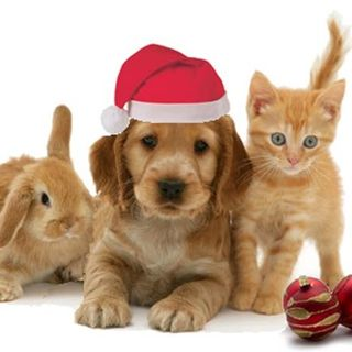 Have your Christmas Pets spayed and neutered for their health and safety
