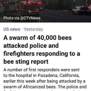 40,000 Africanized Bees Attack Police In Pasadena, CA🐝👮👮‍♀️👨‍🚒👩‍🚒🤕