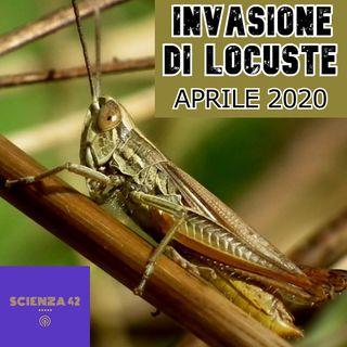 Invasione LOCUSTE in Africa: la Situazione Peggiora - aggiornamento Aprile 2020