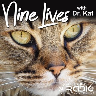 Nine Lives with Dr. Kat - Episode 75 Secrets Your Cat Wants You To Know