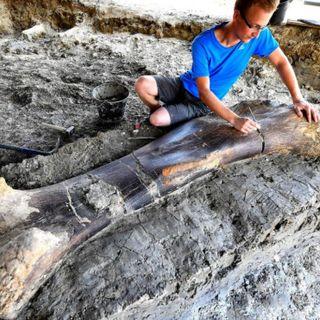 64 - Come fa un osso di Dinosauro a conservarsi per milioni di anni? Come funziona la fossilizzazione?