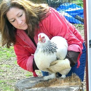 Homestead Chickens with Janet Garman