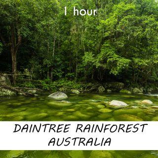Daintree Rainforest Australia | 1 hour FOREST Sound Podcast | White Noise | ASMR sounds for deep Sleep | Relax | Meditation | Colicky