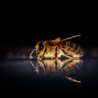 Api, tossicità dei pesticidi raddoppiata in 25 anni