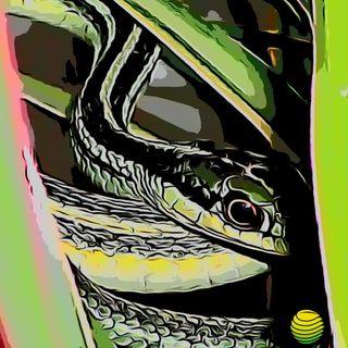 Serpiente listonada