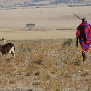 Il turismo d'élite che uccide i Masai