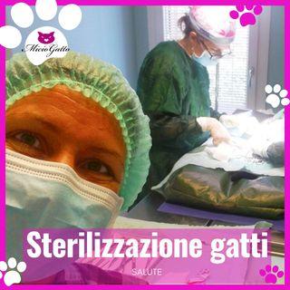 Sterilizzazione del gatto e della gatta spiegata dal veterinario!