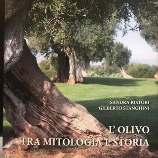L'olivo tra mitologia e storia con Gilberto Stanghini