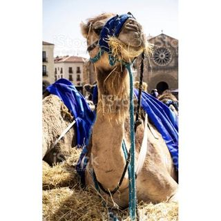 The Straw That Broke The Camels Back