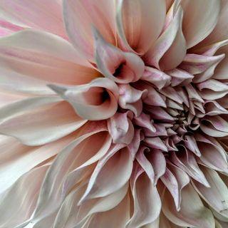 Flower Essences & Essential Oil