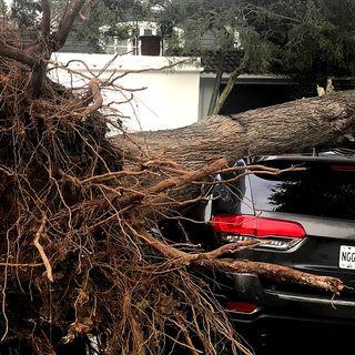 Los fuertes vientos causan destrozos