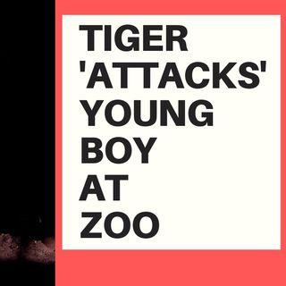 TIGER 'ATTACKS' YOUNG BOY AT ZOO - VIRTUE SIGNAL TIME!