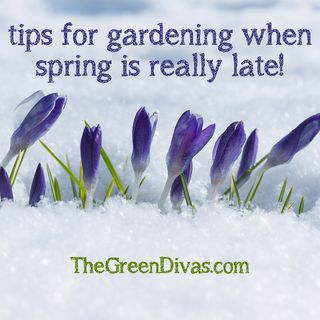 Tips for early spring gardening