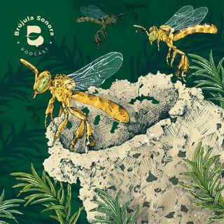 Ep. 12 Las abejas, polinizadoras de vida