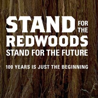 California's Iconic Redwoods - Sam Hodder on Big Blend Radio