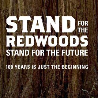 California's Iconic Redwoods - Sam Hodder on Big Blend Radio