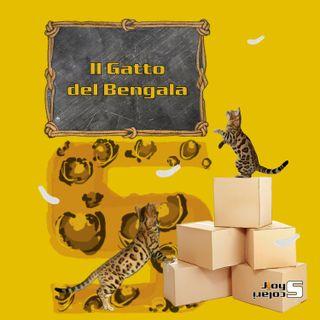 EP1. Perché scegliere un Gatto del Bengala