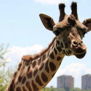 El Recuento: Un zoo de gazapos
