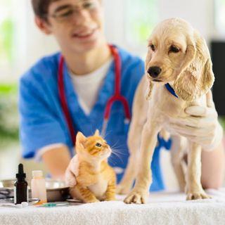 A importância de fazer check-up no seu pet (part. Dra Flávia Clare)