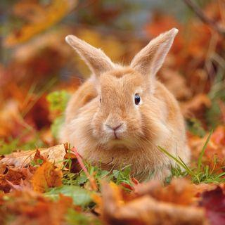 Podcast 4: Non solo cani e gatti: conigli e furetti