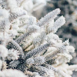 Meditazione per connettersi con l'inverno