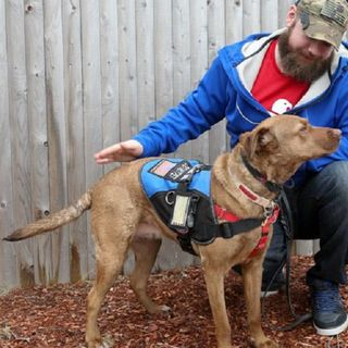 WBZ Cares: Service Dogs For Veterans