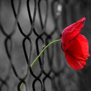 """""""La speranza"""" di Richard Bandler"""
