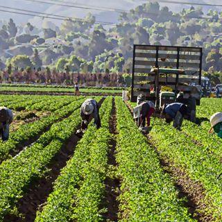 Regolarizzazione migranti: verso l'intesa su permessi di 6 mesi ma con vincoli